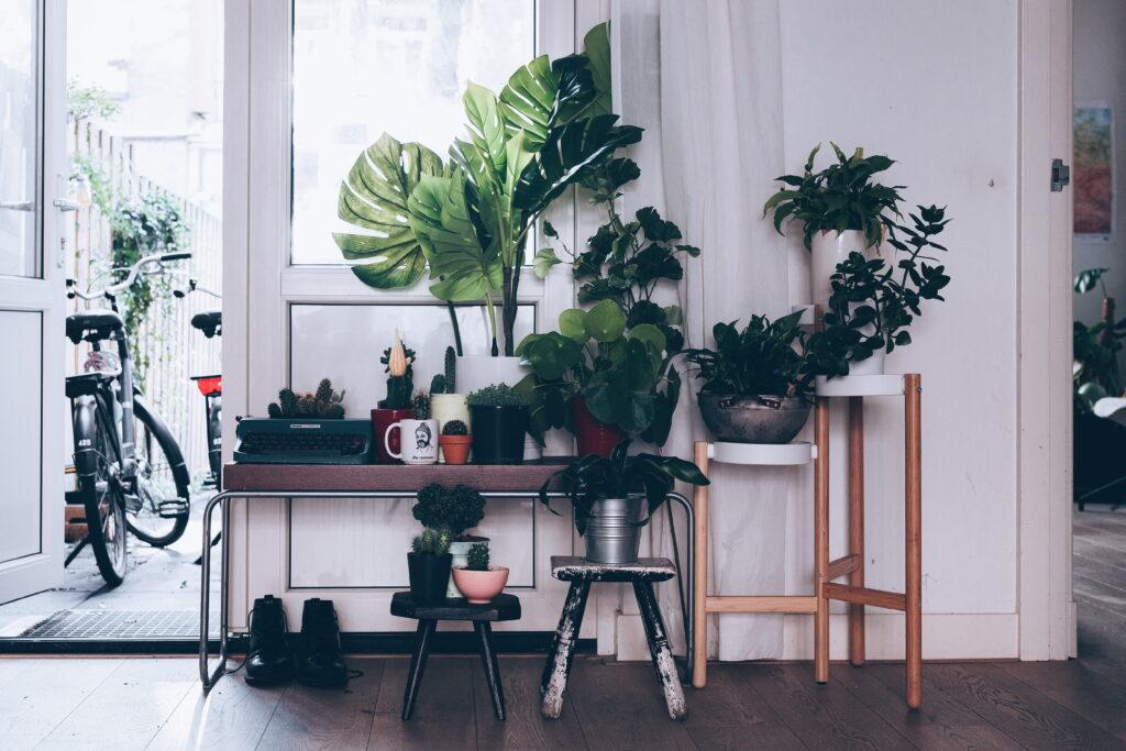 Urban jungle interior style